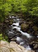 Summer Forest Rocky  Mountain Stream 1 1 poster