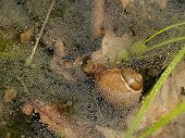 Forest Snail Under Dew Web With Leaves