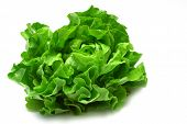 stock photo of butter-lettuce  - green butter head lettuce isolated on white - JPG