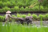 BALI - JANUARY 17: Farmer plows the paddy fields with a motorized plower in Bedulu village, Bali Jan
