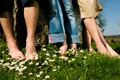 Healthy feet series: feet of men and women of different ages in the grass with daisies, focus on fee