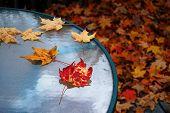Table In Autumn