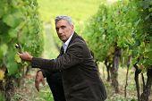 Man crouching down in a vineyard
