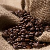 Focus on Coffee beans on burlap fabric