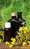 Medical Herb -st John's Wort (hypericum Perforatum)
