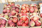 Baskets Of Freshly Picked Apples