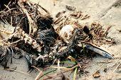 Decomposing dead bird