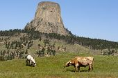 Grazing Near Devils Tower.