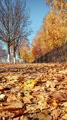 Vertical Photo, Summer In City Autumn Park, Trees, Fence, A Lot Of Foliage, Next To The Road, Sidewa poster
