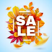 Autumn Sale. Seasonal Fall Promotion Design With Red And Yellow Realistic Leaves. Thanksgiving Octob poster