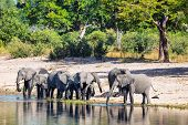 Herd Of African Elephant With Small Babies, Loxodonta On Waterhole In Bwabwata, Caprivi Strip Game P poster
