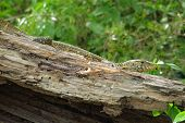 Lizard Sitting On A Piece Of Wood