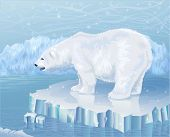 stock photo of polar bears  - Polar bear standing on an ice floe - JPG