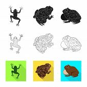 Vector Design Of Wildlife And Bog Symbol. Set Of Wildlife And Reptile Stock Vector Illustration. poster