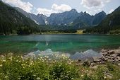 Wild Flowers At The Superior Lake Of Fusine, Friuli Venezia-giulia, Italy poster