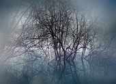 image of marshlands  - trees in swamp area on misty evening - JPG