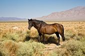 Wild Horses In The Prarie