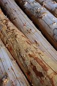 Stripped Logs