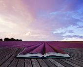 stock photo of night-blooming  - Creative composite image of Summer lavender landscape in pages of magic book - JPG