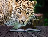 picture of jousting  - Creative composite image of leopard in pages of magic book - JPG