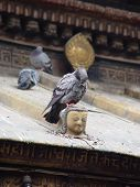 The Pigeon And The Buddha