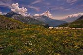Flowers In Mountain