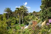 Abbey Gardens, Tresco