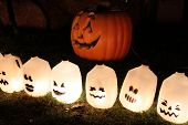 Pumpkin patch with recycled milk jars as ghosts
