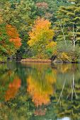 Perfect Autumn Water Reflection