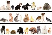 foto of hamster  - Collage of different cute animals - JPG