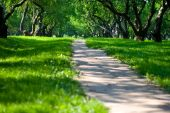 Path In Apple Garden