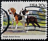 United States Of America - Circa 1984: A Stamp Printed In Usa Shows Beagle And Boston Terrier