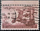 United States Of America - Circa 1956: Stamp Printed In Usa, Shows Wild Turkey Wildlife Conservation