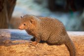 mongoose sits on an old tree