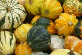 Different Pumpkins