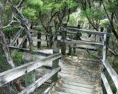 Mangawhai Stairs