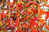 Dried Chili Background Texture