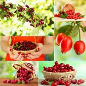 Collage of garden berries
