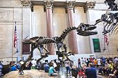 The American Museum For National History In Newe York Holds A Large Collection Of Dinosaur Skeletons