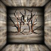 Hunting Trophies On Wooden Room