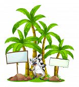 Illustration of a lemur in the middle of the empty signboards in front of the palm trees on a white