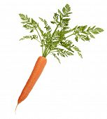 Carrot With Leaves Isolated On White Background