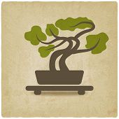 image of bonsai tree  - bonsai old background  - JPG
