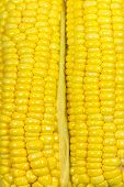 Yellow Sweetcorn Texture