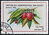 stamp printed in Madagascar shows Litchis Litchi Chinensis Tropical Fruit