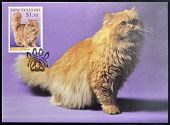 stamp printed in New Zealand shows Domestic Cat Persian