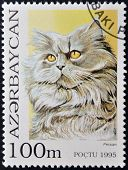 A stamp printed in Azerbaijan shows cat persian