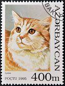 A stamp printed in Azerbaijan shows cat cymric