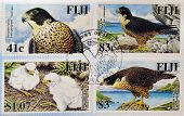 Stamps printed in Fiji shows Peregrine Falcon (Falco peregrinus)