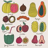 Bright tropical fruit set in vector. Guava, salak, papaya, rambutan, tamarind, feijoa, litchi, kiwan